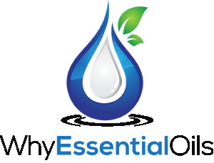 1 logo 300x229 - Angelica Root Essential Oil